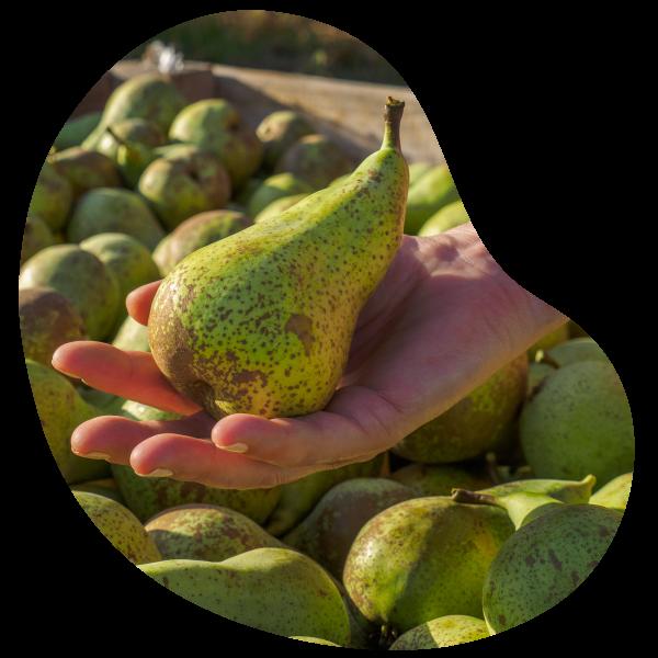 vendre des fruits production local vendée