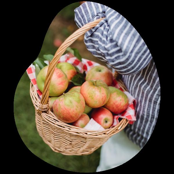 Journées cueillettes vergers d'apremont cueillir fruits