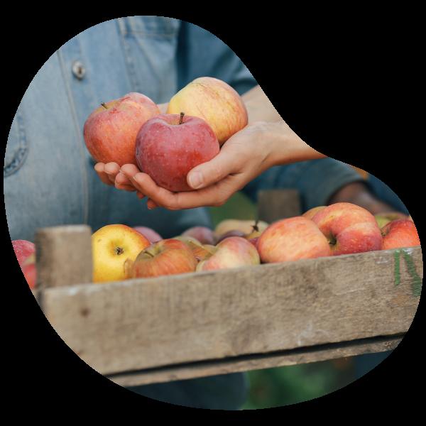 Journée cueillette au verger a apremont manger pommes
